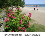 Beach With Wild Roses