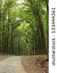 tree tunnel | Shutterstock . vector #133444361