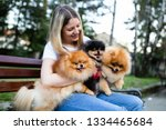 Stock photo beautiful young woman sitting on bench in park with her adorable pomeranian dogs 1334465684