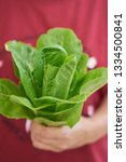 close up fresh salad leaves in... | Shutterstock . vector #1334500841