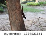 Small photo of Tree Sugar squirrel