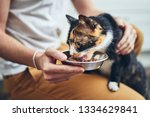 domestic life with pet. man... | Shutterstock . vector #1334629841