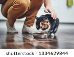 domestic life with pet. cute... | Shutterstock . vector #1334629844