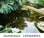 water wavers in a small pond... | Shutterstock . vector #1334664041