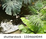 water wavers in a small pond... | Shutterstock . vector #1334664044