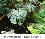 water wavers in a small pond... | Shutterstock . vector #1334664047