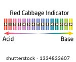 red cabbage indicator. for acid ... | Shutterstock .eps vector #1334833607