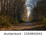 forest reclaiming the zone  in... | Shutterstock . vector #1334843441
