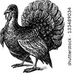 turkey | Shutterstock .eps vector #133489034