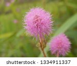 insects  flowers and other... | Shutterstock . vector #1334911337
