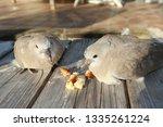 Turtle Dove Couple On Bench...
