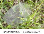 ground spiders web  family... | Shutterstock . vector #1335282674