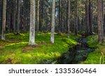 forest river moss landscape....   Shutterstock . vector #1335360464