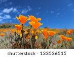 California Poppy Field  Big Su...