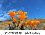 California Poppy Field  Big Su...