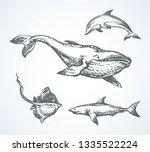 Big Atlantic Flipper Baleen...