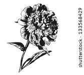 peony hand drawn vector... | Shutterstock .eps vector #133568429