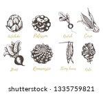 set vegetables radishes  beets  ... | Shutterstock . vector #1335759821