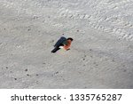 a red breasted bullfinch flew... | Shutterstock . vector #1335765287