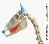3d rendered medically accurate... | Shutterstock . vector #1335926954