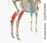 3d rendered medically accurate... | Shutterstock . vector #1335926984