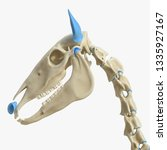 3d rendered medically accurate... | Shutterstock . vector #1335927167