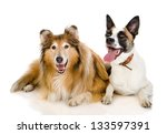 Stock photo two dogs looking at camera isolated on white background 133597391