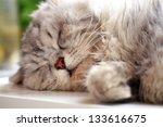 Stock photo beautiful adorable white cat sleeping 133616675