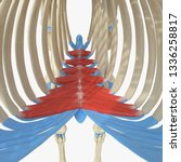 3d rendered medically accurate... | Shutterstock . vector #1336258817