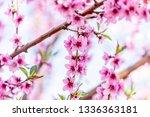 beautiful blooming peach trees... | Shutterstock . vector #1336363181