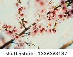 beautiful blooming peach trees... | Shutterstock . vector #1336363187