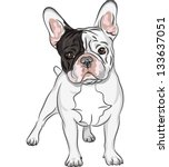 animal,black,brawny,breed,brown,bulldog,companion,cute,dog,drawing,ears,folds,french,french bulldog,frenchie