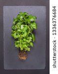 bush of fresh green basil with... | Shutterstock . vector #1336376684