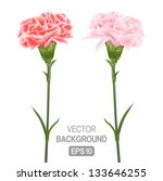 Two flowers on a white background of carnations