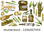cane sugar with leaves. set of...   Shutterstock .eps vector #1336507454