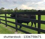 orlando  florida august 24 ... | Shutterstock . vector #1336758671