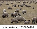 outdoor view of flock of sheep... | Shutterstock . vector #1336834901