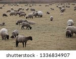 outdoor view of flock of sheep... | Shutterstock . vector #1336834907