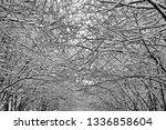 background  intertwining tree...   Shutterstock . vector #1336858604