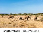Elephant Colonies That Are...