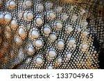 Background Leather Of Iguana