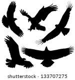 eagle silhouette on white... | Shutterstock . vector #133707275