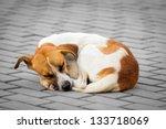 Homeless Abandoned Dog Sleepin...