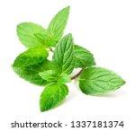 Fresh Peppermint Leaves...