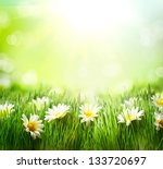 Spring Meadow With Daisies....