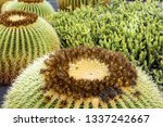 Cactus Plant Isolated On...