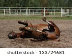 Funny Brown Horse Rolling On...
