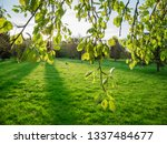 spring background at backyard... | Shutterstock . vector #1337484677