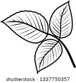 compound leaf of raspberry... | Shutterstock .eps vector #1337750357