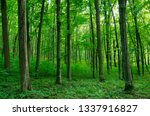 sunlight in the green forest ... | Shutterstock . vector #1337916827